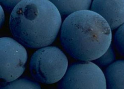 Boost Up With Blueberries