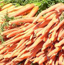 Carrots_HP_Square