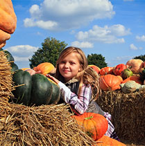 PumpkinPatch_HP_Square