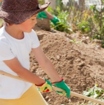 Important Steps to Start a Garden