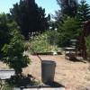 school garden_HP.jpg