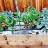garden box 356.jpg