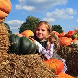 pumpkin-patch-HP-356