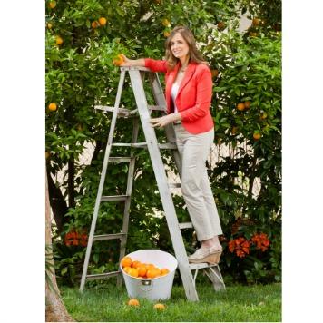 picking oranges HP